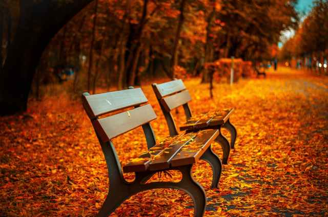 bench-fall-park-rest-40884.jpeg