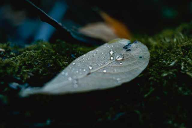 close up photography of leaf